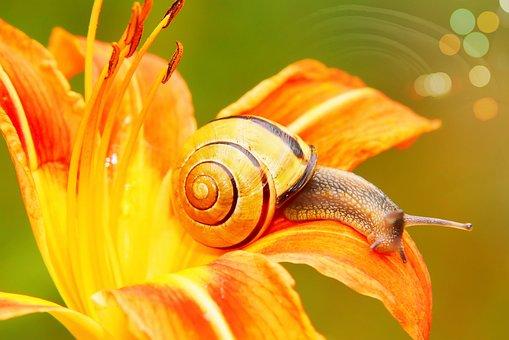Wstężyk Huntsman, Molluscum, Flower, Lily, Posts