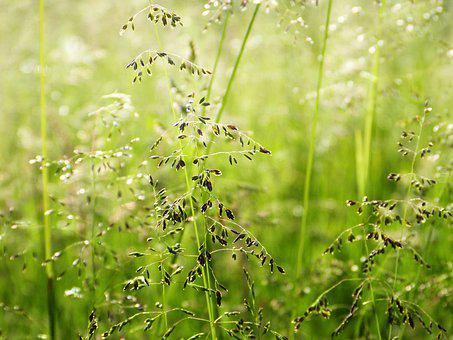 Grasses, Meadow, Nature, Light, Shining, Mood