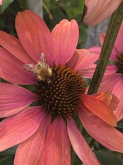 Bee, Flower, Red, Sunflower, Blossom, Bloom, Nectar