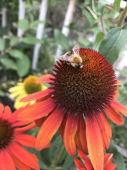 Hummel, Red, Garden, Blossom, Bloom, Nectar, Nature
