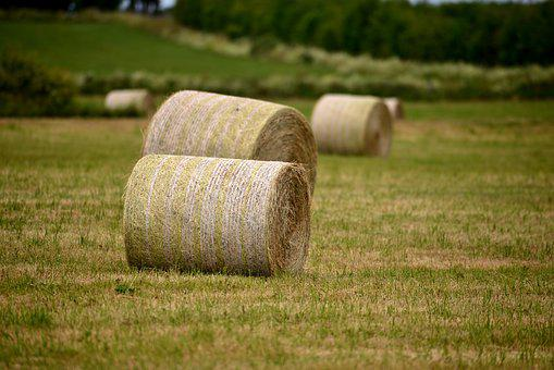 Hay Bales, Forage, Pasture, Use, Grass, Hay, Nature