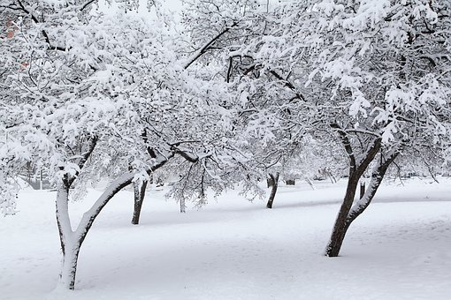 Russian Winter, White Snow, Snow Covered Trees, Moscow