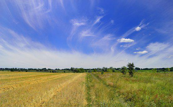Field, Ukraine, Nature, Sky, Landscape, Summer, Meadow
