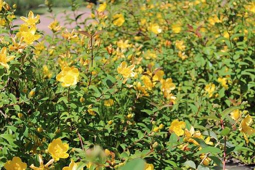 Flowers, Yellow, Flower, Nature, Spring, Plants, Garden