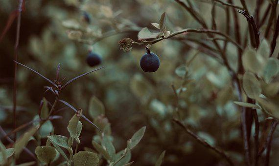 Blueberry, Summer, Nature, Delicious, Berry, Blue