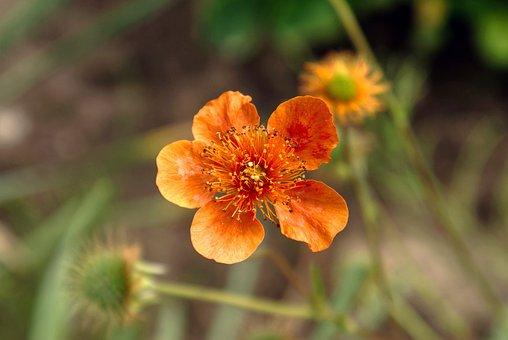 Flowers, Macro, Nature, Garden, Spring, The Petals, Red