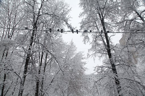 Russian Winter, White Snow, Snow Covered Trees