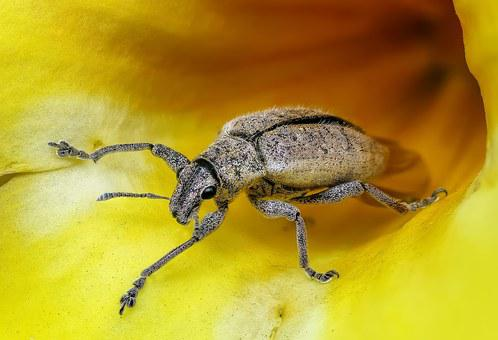 Insect, Macro, Bug, Animal, Magnification, Detailed