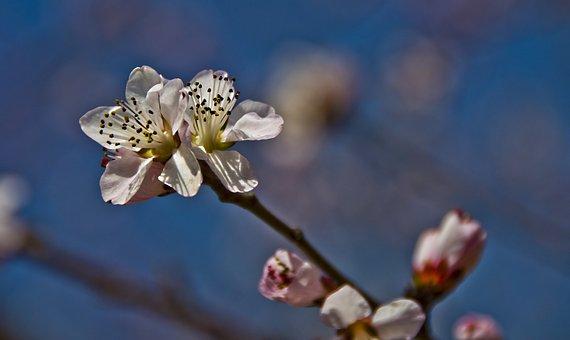 Beautiful, Flowers, Plum, Boring, Shooting