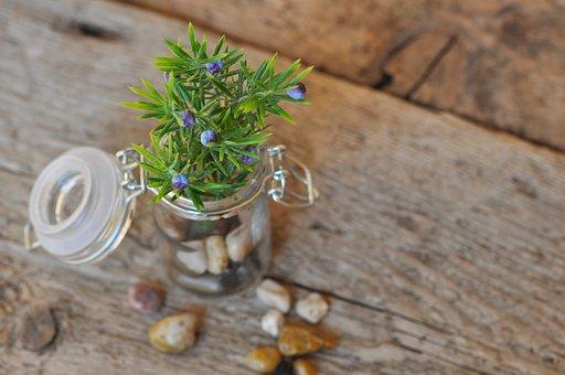 Deco, Decoration, Decorative, Jar, Glass, Branch
