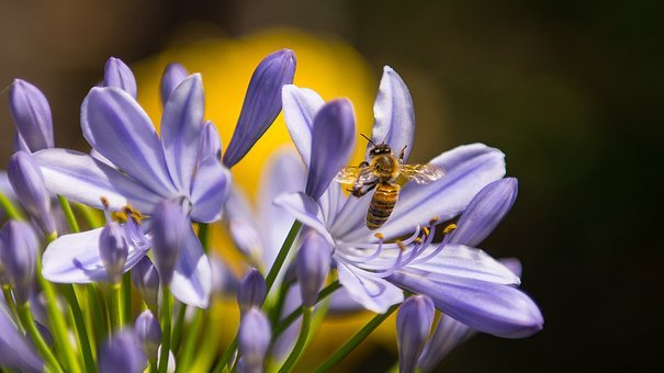 Bee, Insect, Purple, Flower, Wasp, Spring, Plant