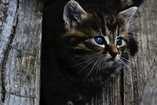 Cat, Kitten, Rozkošné, Little, Wood