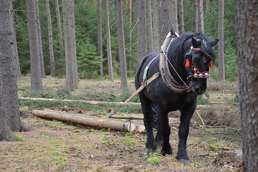 Horse, Pulling, Forestry, Logs, Concentration