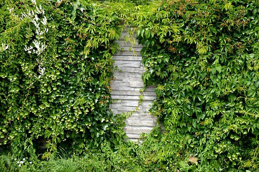 Noise Barrier, Hedge, Wall, Overgrown, Green, Plant