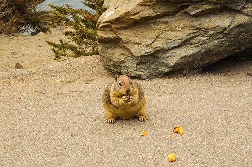 Usa, America, California, Animal, Wild Animal, Squirrel