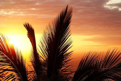 Palm, Reunion Island, Sunset, Evening, Inflamed, Sun