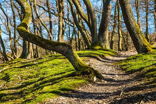 Forest, Hiking, Trail, Away, Path, Moss, Autumn Forest