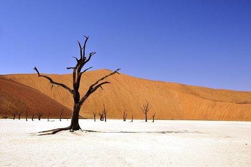 Tree, Desert, Namibia, Dead Vlei, Deadvlei, Clay Pan
