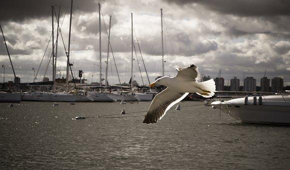 Bird, Seagull, Wings, Sea, Gull, Soaring