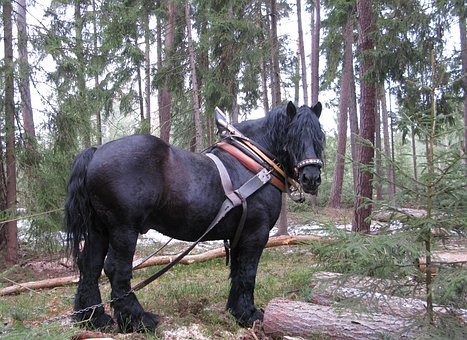 Horse, Working In The Forest, Concentration