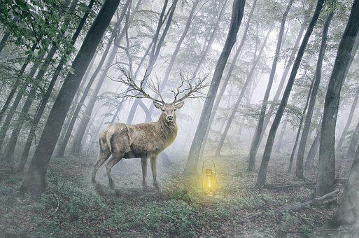 The Deer, Animal, Wild, Red Deer, Portrait Of Animals