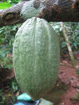 Cocoa Bean, Cocoa, Cocoa Fruit, Cacao, Chocolate, Sweet