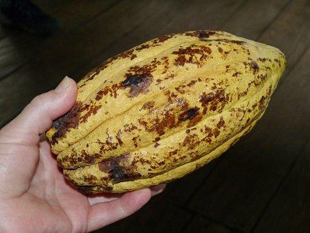 Cocoa Bean, Cacao, Cocoa, Chocolate, Confectionery