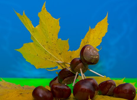 Chestnut, Leaves, Autumn, Tinker, Fall Color, Butterfly