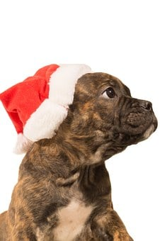 Bulldog, Pup, Christmas, Dog, Animal, Pet, Puppy, Funny