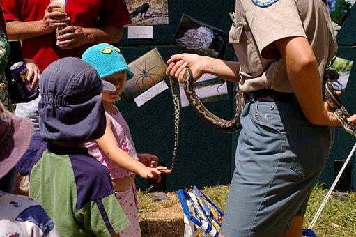Snake, Python, Children, Meeting, Touching, Learning