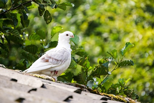 Roof, Leaves, Tile, Gable, Home, Building, Plumage