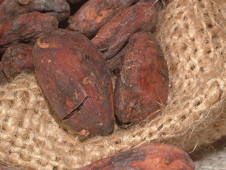 Cacao Beans, Cocoa, Cocoa Bean, Seeds, Plant, Bean