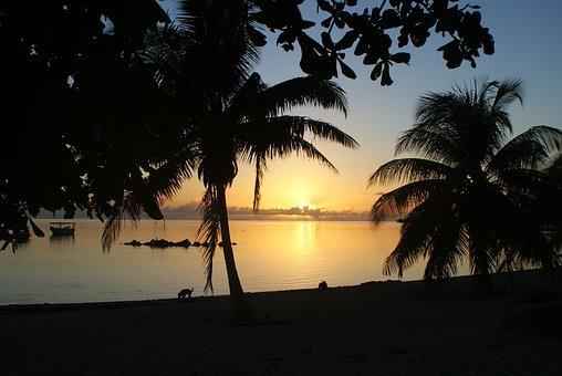 Tahiti, Sunset, Sun, Evening, Palms, Silhouette