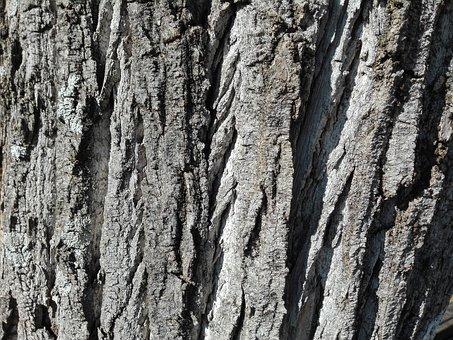 Tree, Wood, Bark, Trunk, Plant, Texture, Wrinkled