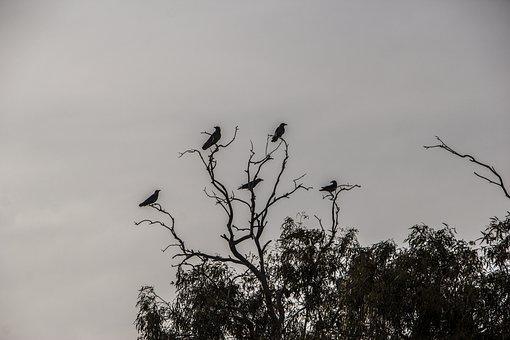 Crows, Dark, Tree, Black, Halloween, Scary, Bird, Raven