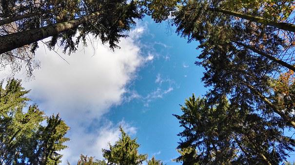 Forest, Tree, Clouds, Nature, View