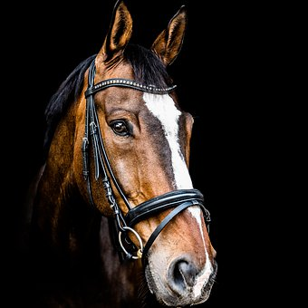 Horse, Horse Head, Animal, Brown, Ride, Animal Portrait