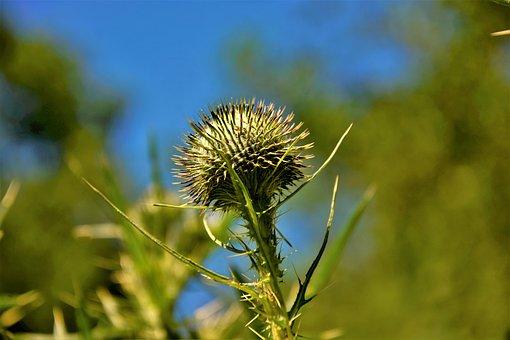 Plant, Thorn Bush, Sharp, Spiked, Barbed, Spine