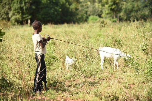Goat, Boy, Herding, Africa, Kenya, Young, Animal, Farm