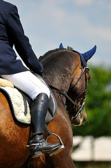 Horse, Horse Riding, Rider, Head, Brown, Showjumping