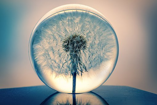 Decoration, Dandelion, Glass, Ball, Close Up, Plant