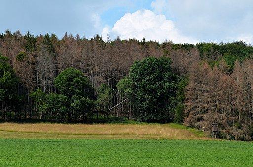 Waldsterben, Dead Plant, Dying Tree, Dead Wood, Dry