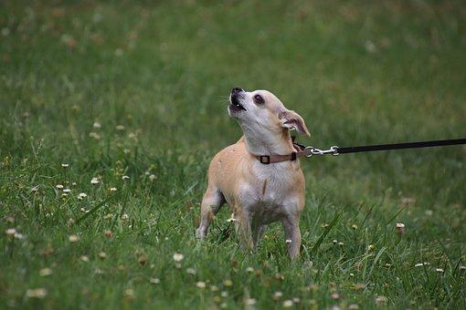 Dog, Canine, Domestic, Animal, Animals, Cute, Portrait