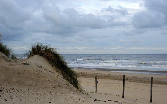 Marram Grass, Dune, Dunes, Beach, Netherlands