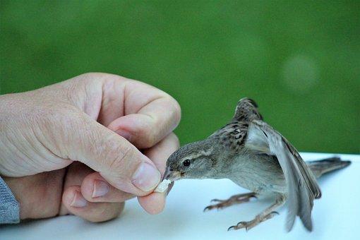 Sparrow, Trustful, Feed, Autumn, Cute, Cheeky, Animal