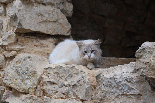 Cat, Felines, Domestic, Sad, Pensive, Cute, Adorable