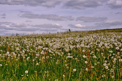 Dandelions, Landscape, View, Air, Clouds, Field, Nature