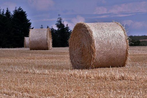 Straw, Summer, Harvest, Field, Stubble, Landscape