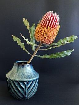 Native, Flower, Banksia, Australian, Wildflowers, Bloom