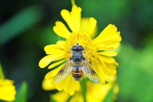 Flower, Nature, Yellow, Bee, Honey, Summer, Garden